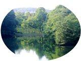 f:id:toxandoria:20080716224739j:image:right