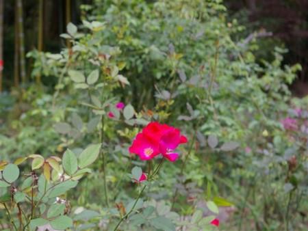 f:id:toxandoria:20081023131912j:image