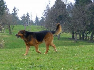 f:id:toxandoria:20090914090720j:image