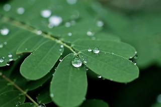水滴のつく緑の葉っぱ