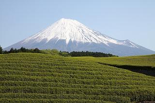 富士山(茶畑 大淵笹場)