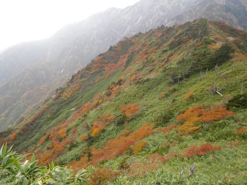 f:id:toyama-rouzan:20111014231218j:image:w300