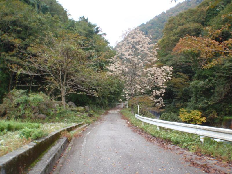 f:id:toyama-rouzan:20131104123324j:image:w300