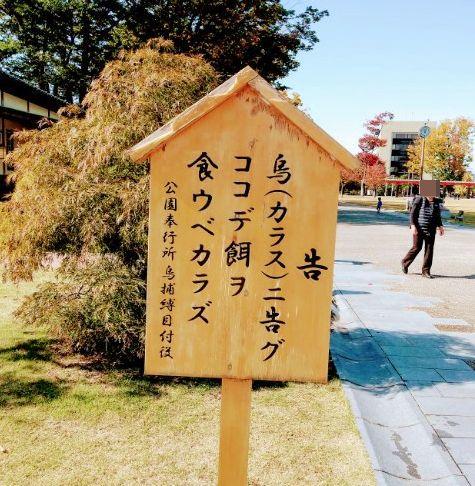 f:id:toyamayama:20201105102555j:plain