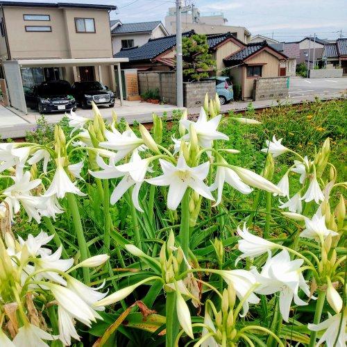 f:id:toyamayama:20210703121751j:plain