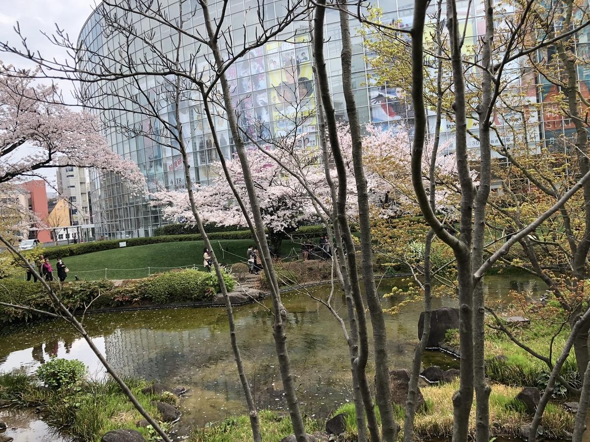 毛利庭園と桜と池2