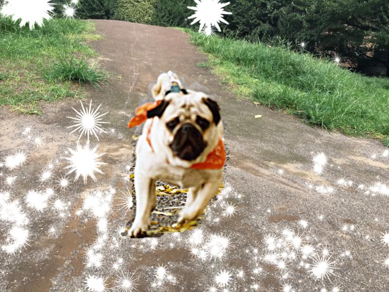 坂を走るタロー