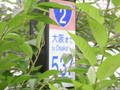 大阪まで537Km
