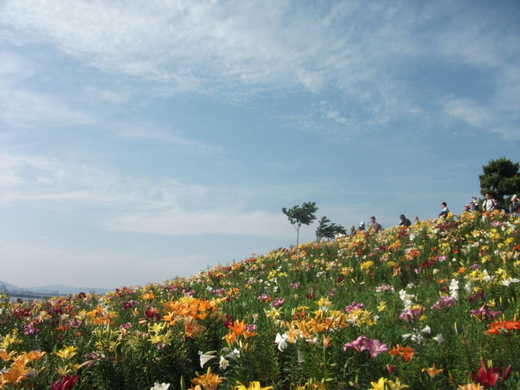 f:id:toyoshima-tatsuya:20160619230826j:plain