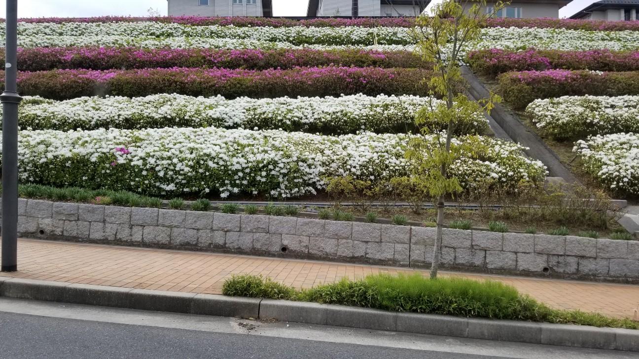 f:id:toyotahomekokoro:20190429154609j:image