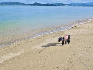 海岸沿い写真