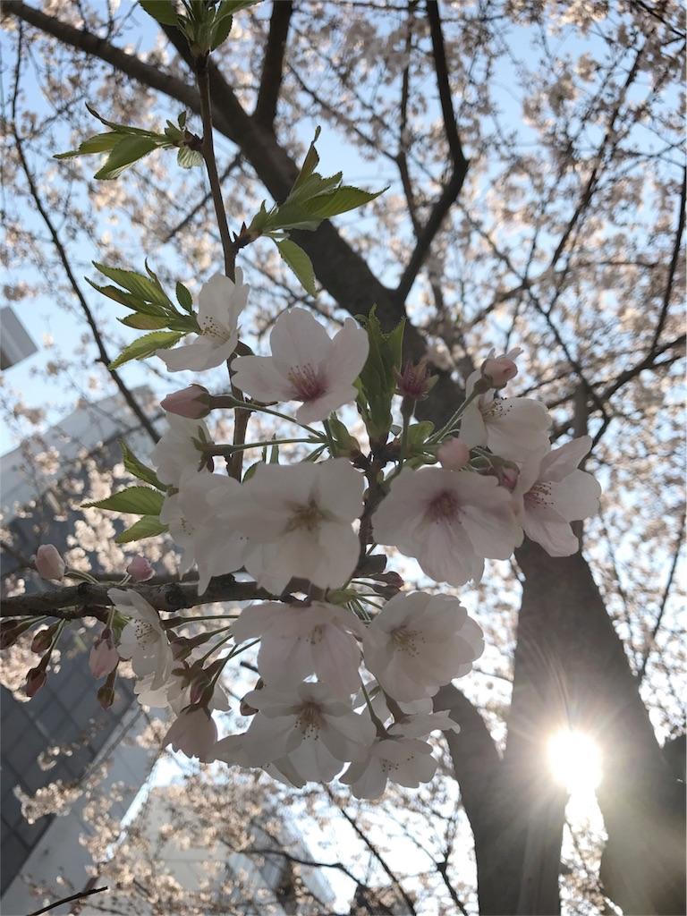 f:id:tozu-kanade-maki:20180325214616j:image
