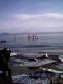 [ウインドサーフィン] 津久井浜海岸 ピザーラ クア・アイナカップ2008 センターボードクラシ