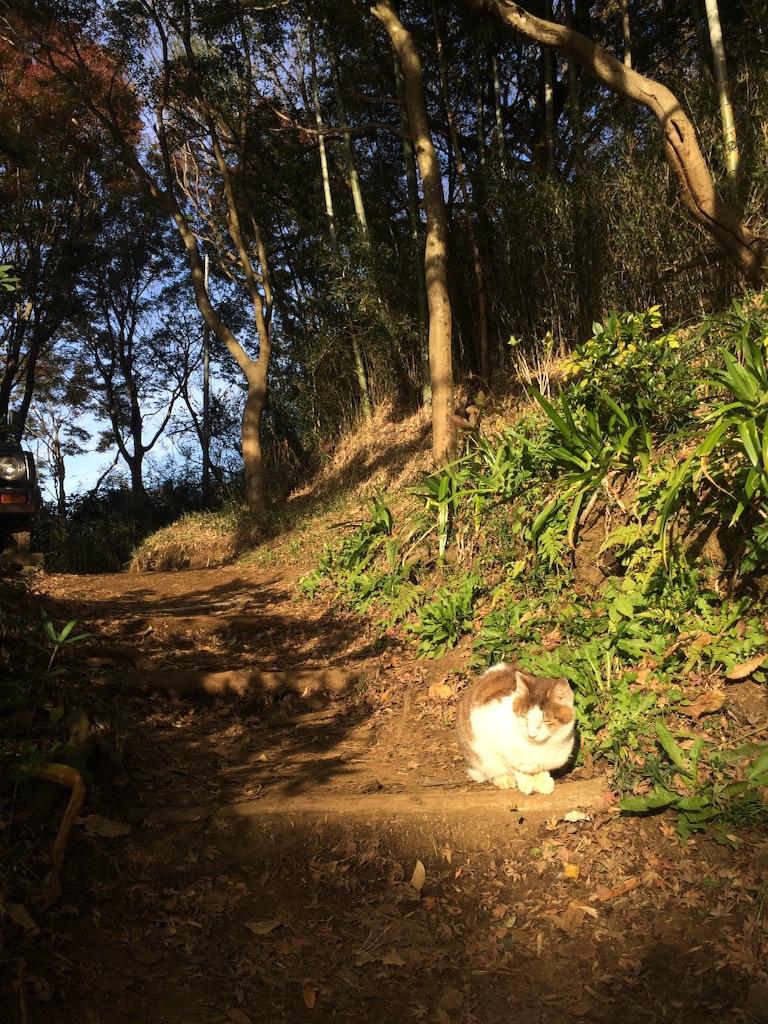 f:id:trail1048:20151203112619j:image