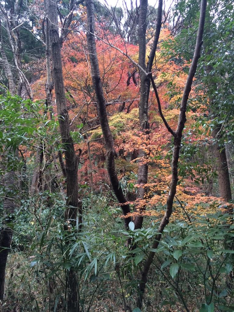 f:id:trail1048:20151224084319j:image