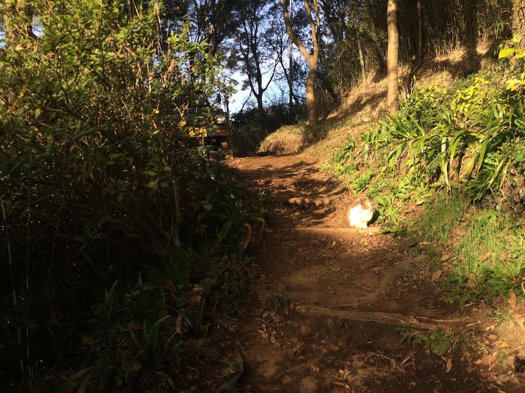 f:id:trail1048:20160301141038j:plain