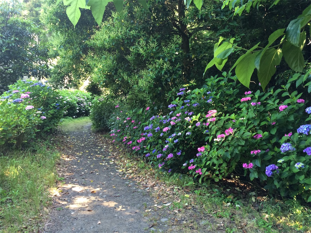 f:id:trail1048:20160617081658j:image