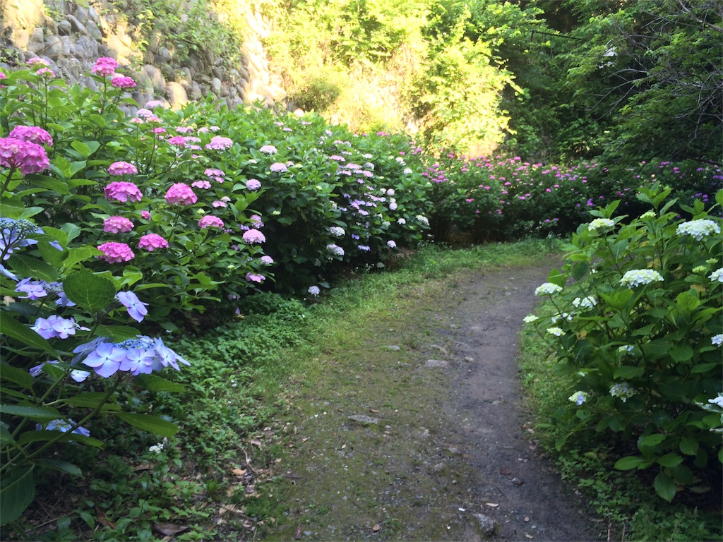 f:id:trail1048:20160617081727j:image
