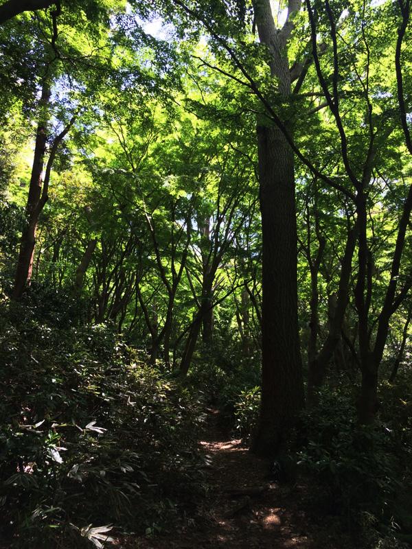 f:id:trail1048:20170501090247j:plain
