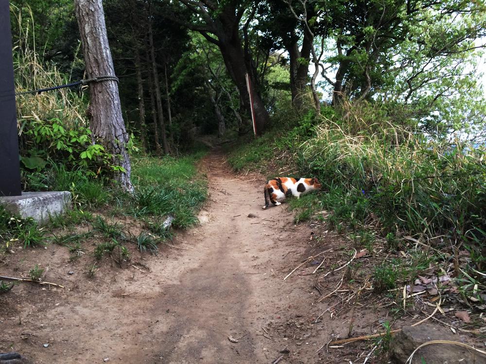 f:id:trail1048:20170601091154j:plain
