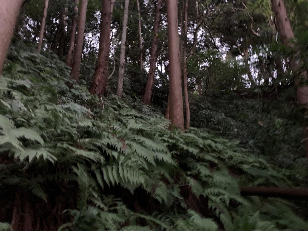f:id:trail1048:20181116080606j:image