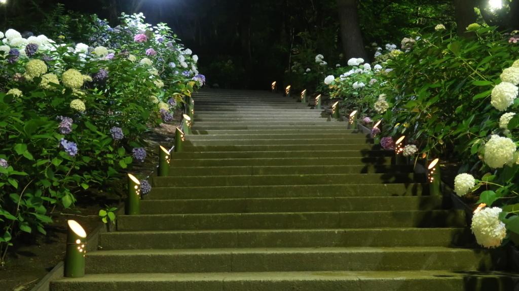 八景島あじさいライトアップ