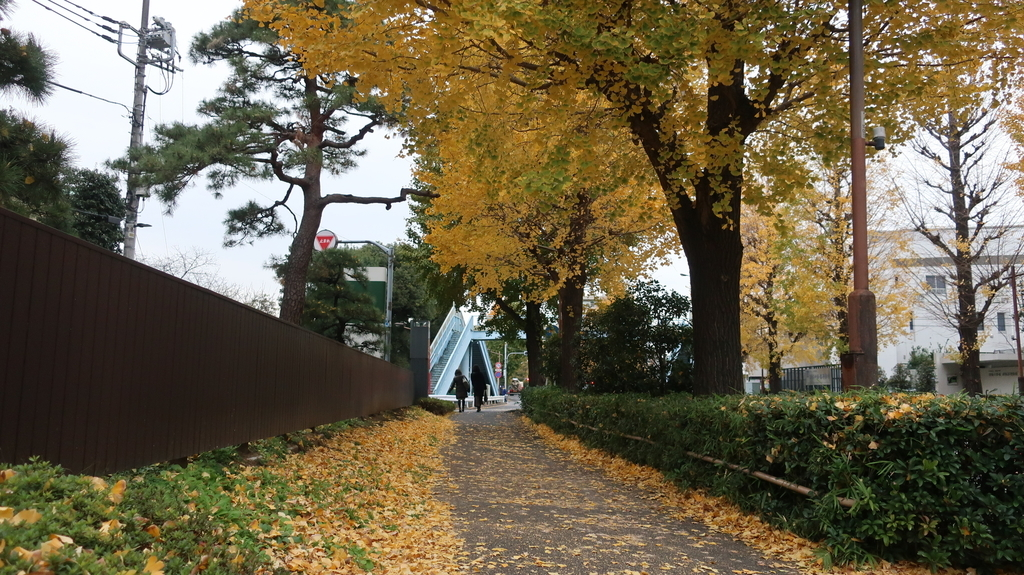 椿山荘の周辺
