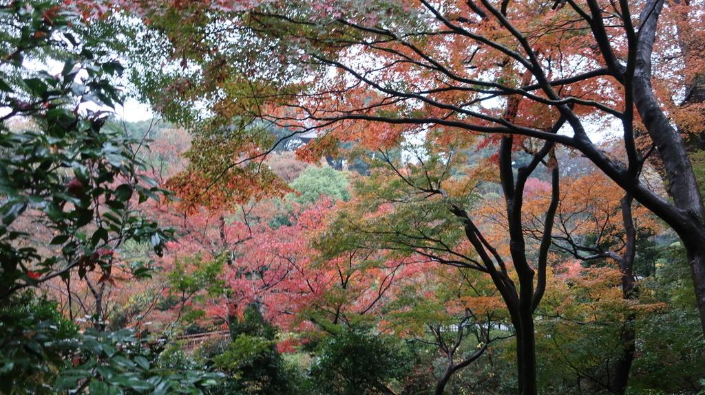 椿山荘の紅葉