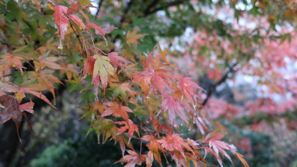 椿山荘の紅葉  もみじ