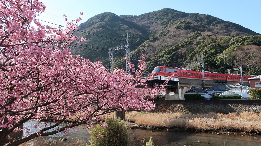 河津桜と伊豆急行