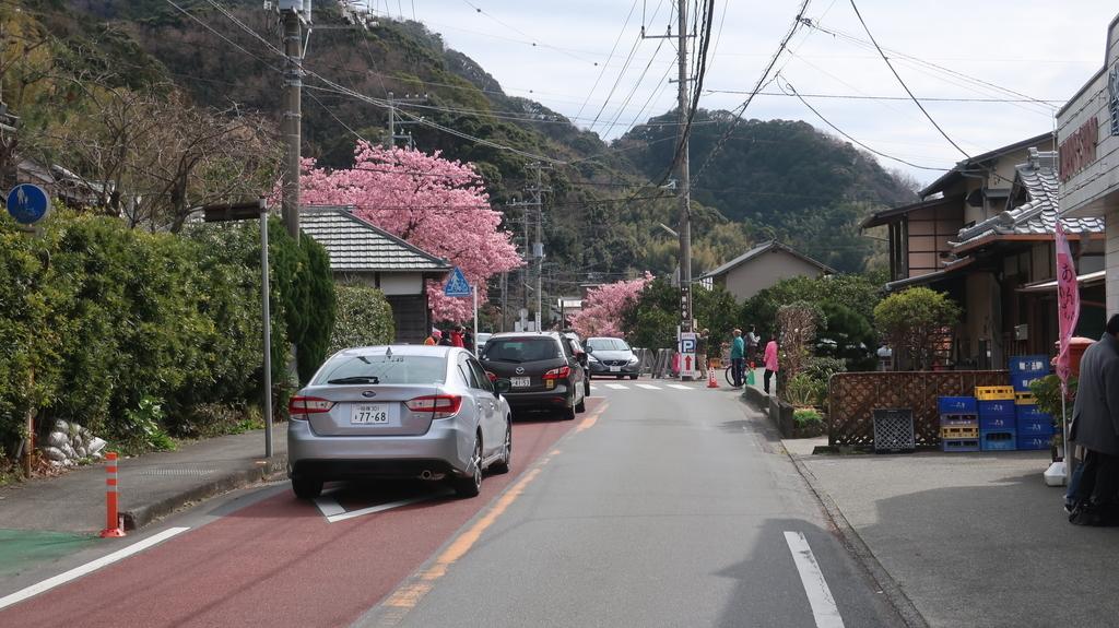 河津桜 平日の渋滞