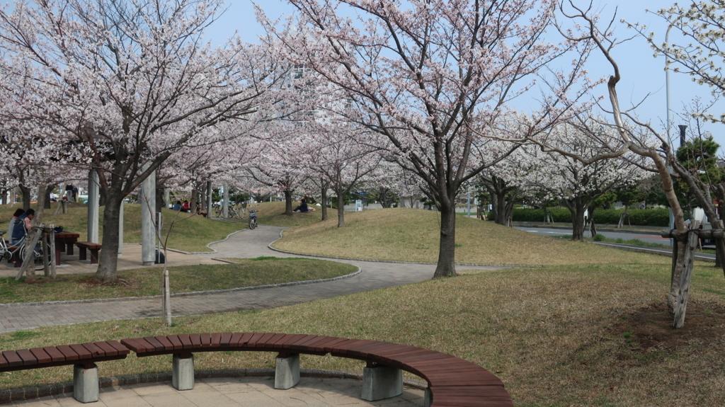 明海大の桜