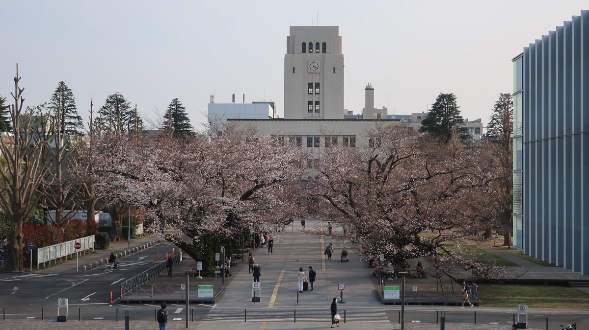 東工大の桜