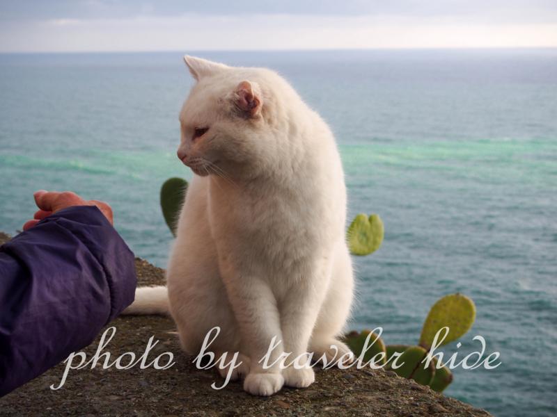 手が体に触れた瞬間猫パンチをする猫