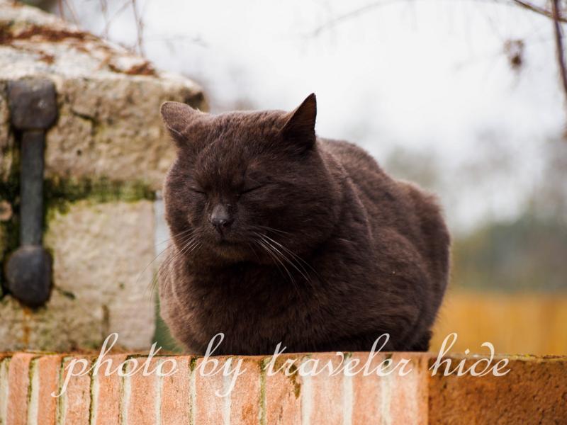 トルチェッロ島の黒猫