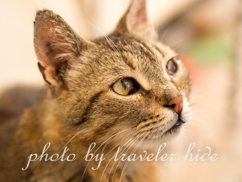イドラ島のカフェでえさをねだる猫