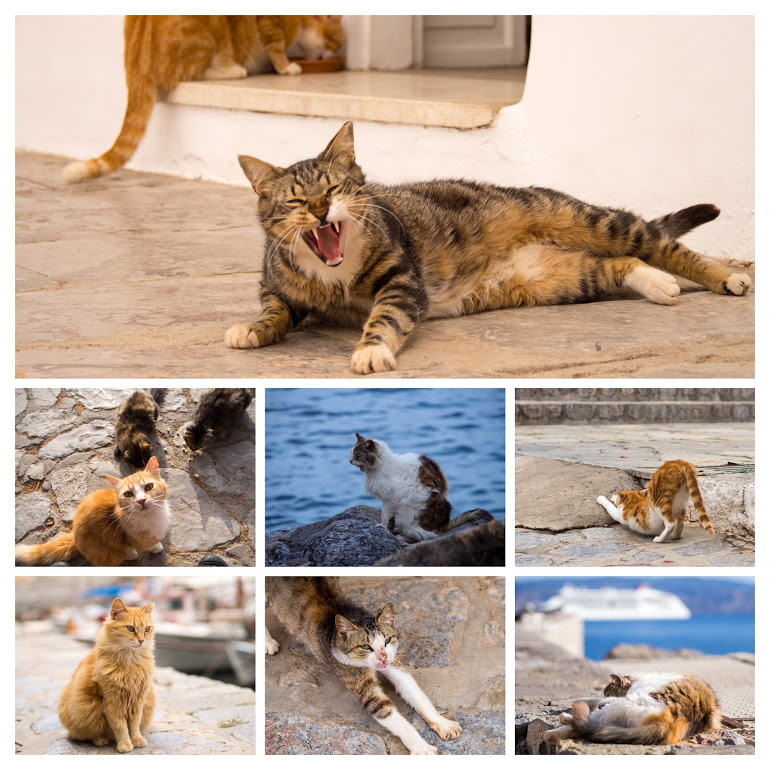 個性豊かなイドラ島の猫