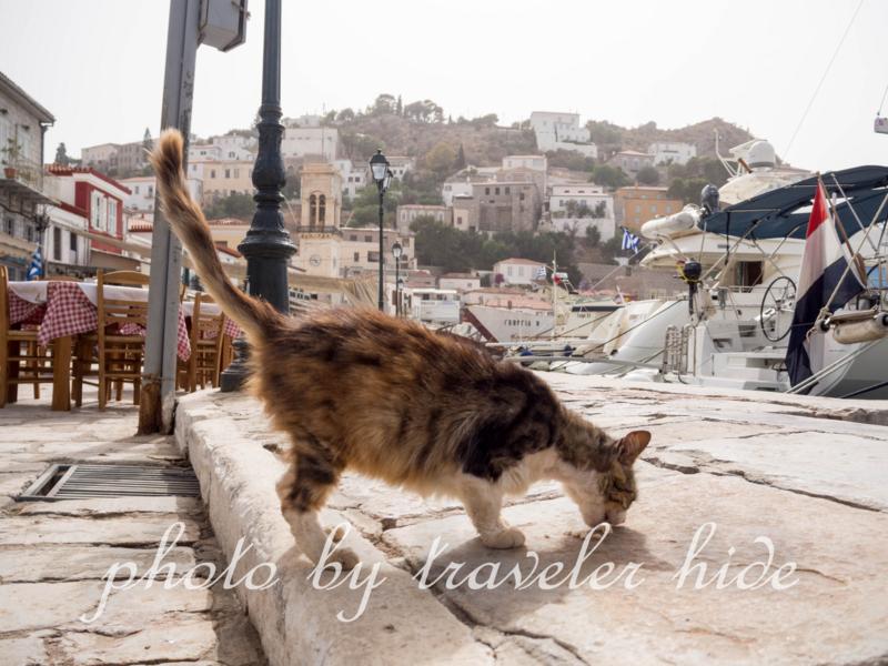 キャットフードを食べるイドラ島の猫