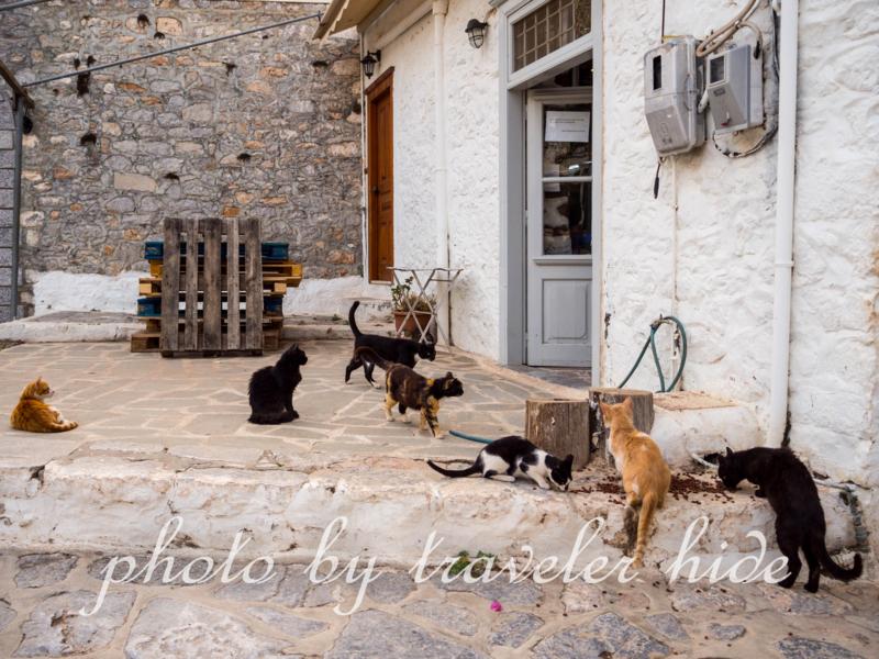 島の人が与えたキャットフードを食べるイドラ島の猫