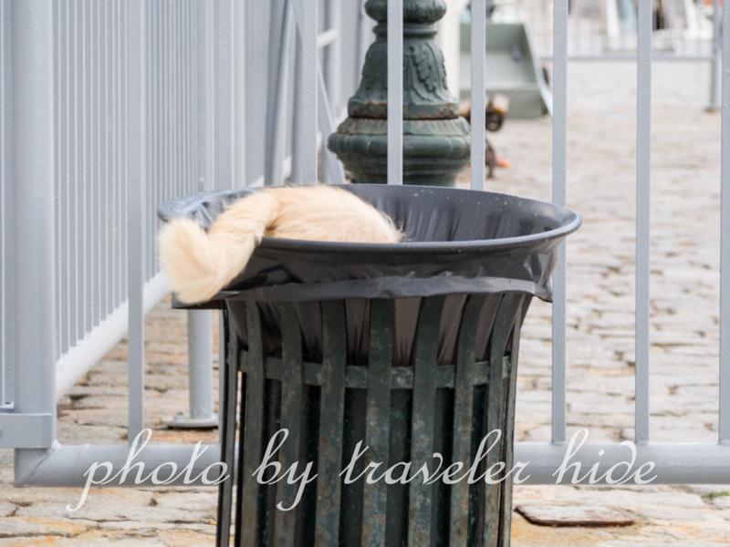 ゴミ箱をあさるイドラ島の猫
