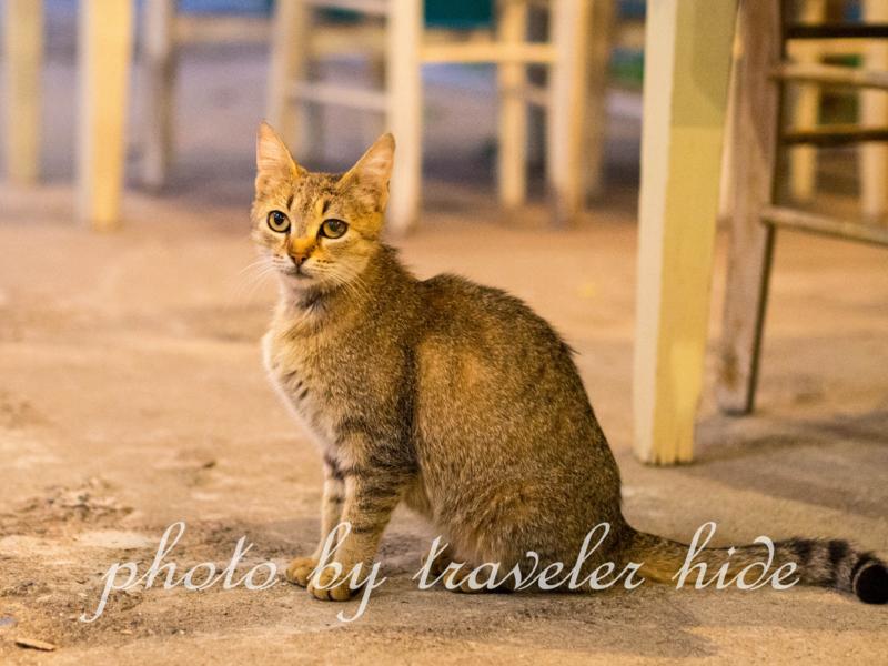 ミトスゲストハウス(Mythos Guesthouse)の1階にあるレストランで食事の最中寄って来た猫