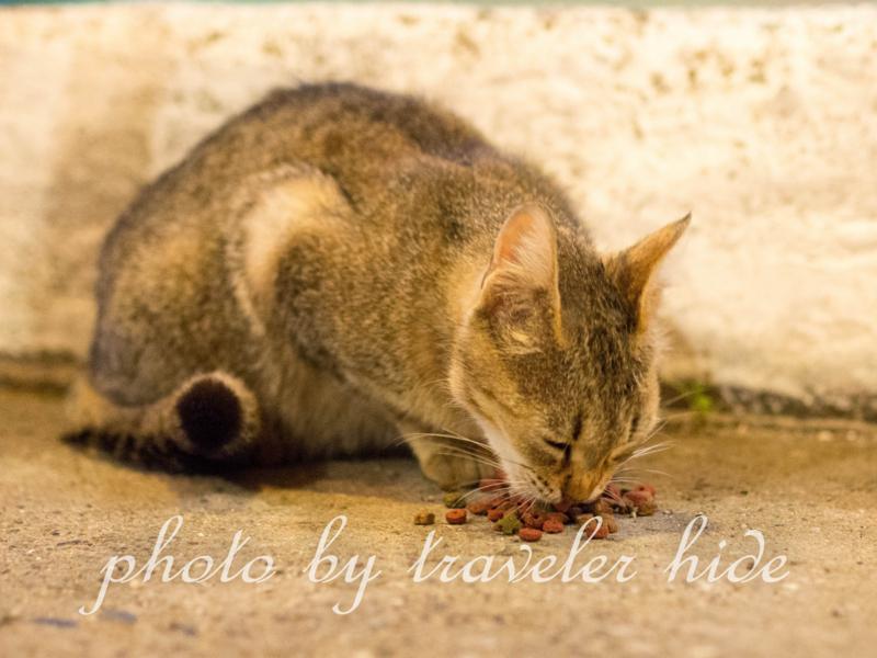 ミトスゲストハウス(Mythos Guesthouse)の1階にあるレストランで食事の最中寄って来た猫。キャットフードを食べている