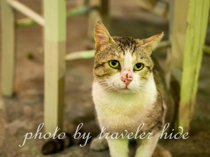 ミトスゲストハウス(Mythos Guesthouse)の1階にあるレストランで食事の最中寄って来た猫。キャットフード以外の食べ物をほしがる