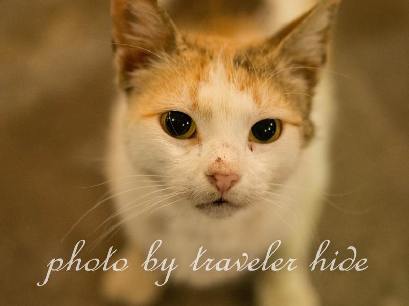 ミトスゲストハウス(Mythos Guesthouse)の1階にあるレストランで食事後に寄って来たつぶらな瞳をした猫