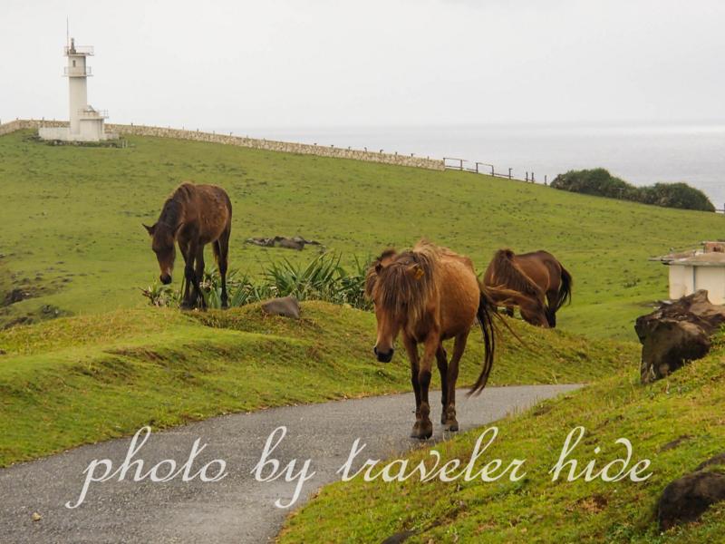 東崎展望台周辺を歩く与那国馬