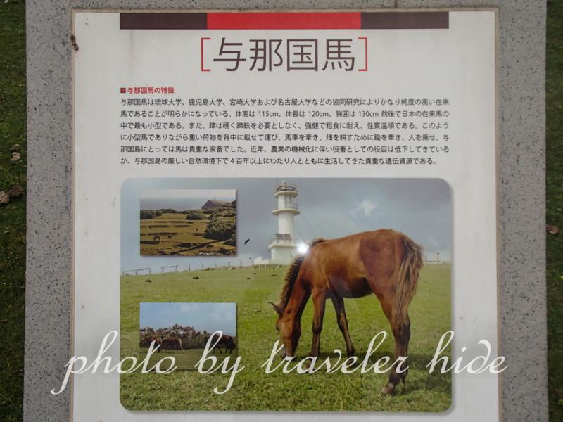 与那国馬の説明