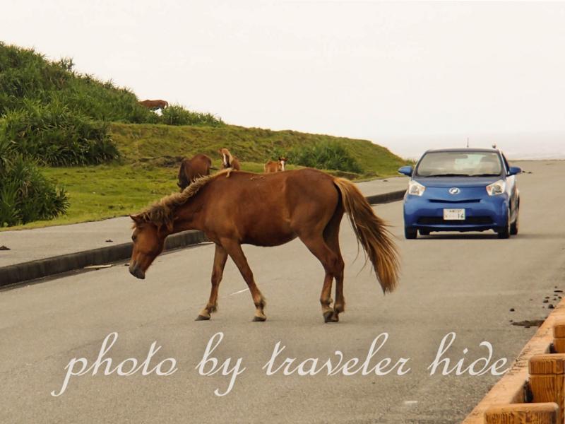 与那国馬が道路を横切るのを待つ車