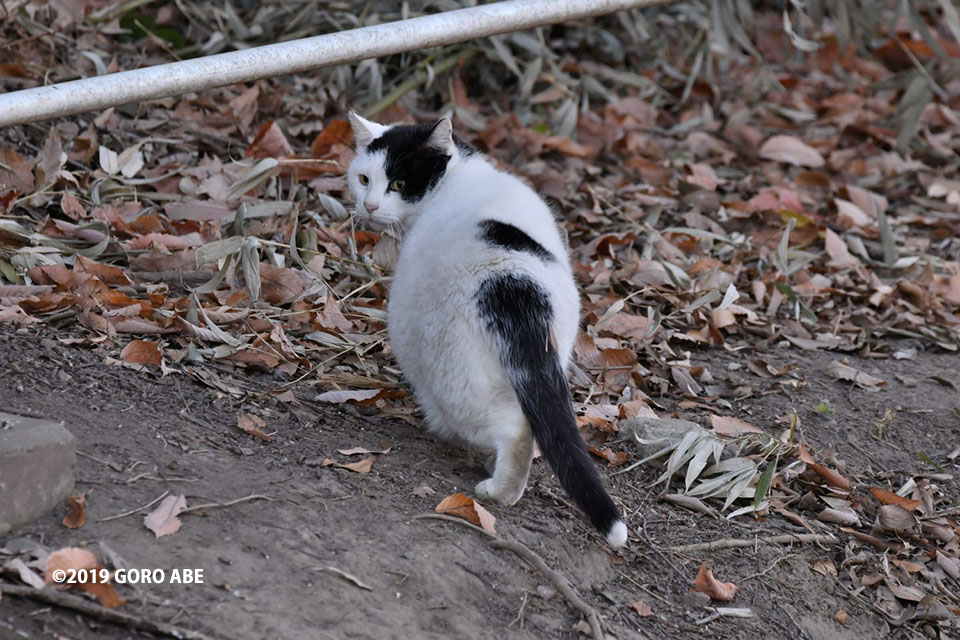 尻尾の先が白い猫
