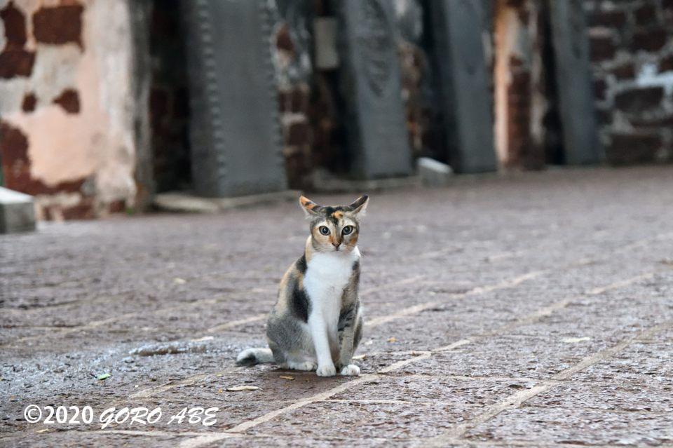 セントポール教会の猫