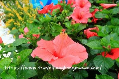f:id:travelhongkongmacau:20190322103944j:plain